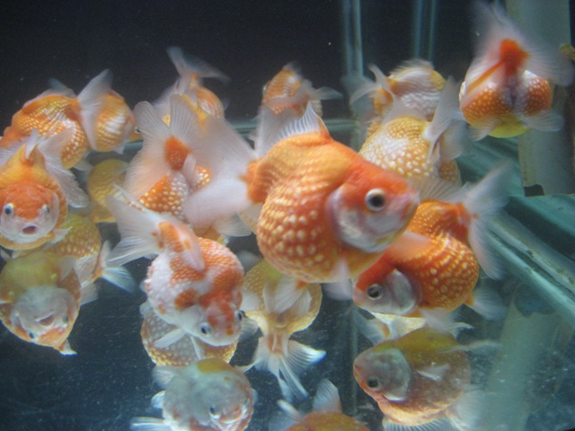 Aquarium Supplies Aquarium Fish Suppliers Tropical Fish